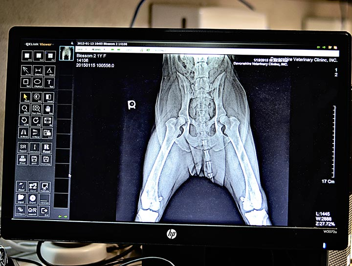 Xrays for Cats & Dogs